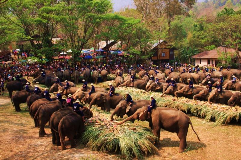 วันช้างไทย (1)
